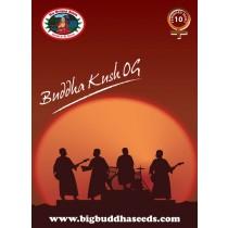 BIG BUDDHA SEEDS - BUDDHA KUSH OG - 5 FEMINISED