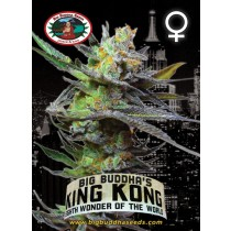 BIG BUDDHA SEEDS - KING KONG - 5 FEMINISED