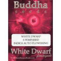 BUDDHA SEEDS - WHITE DWARF - 5 FEMINISED