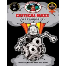 BIG BUDDHA SEEDS - CRITICAL MASS AUTOMATIC - 10 Feminised
